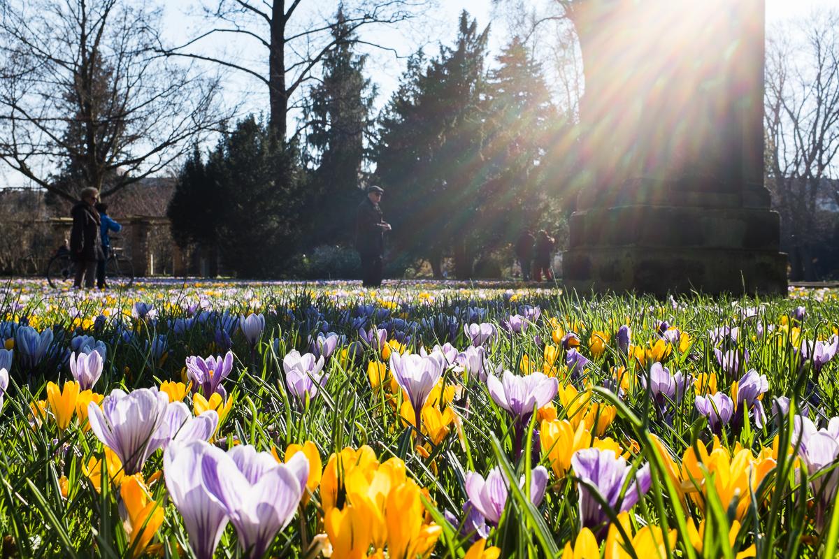 Frühlingsblumen im Fürther Stadtpark