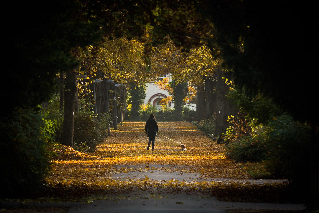 Stadtpark Fürth Allee