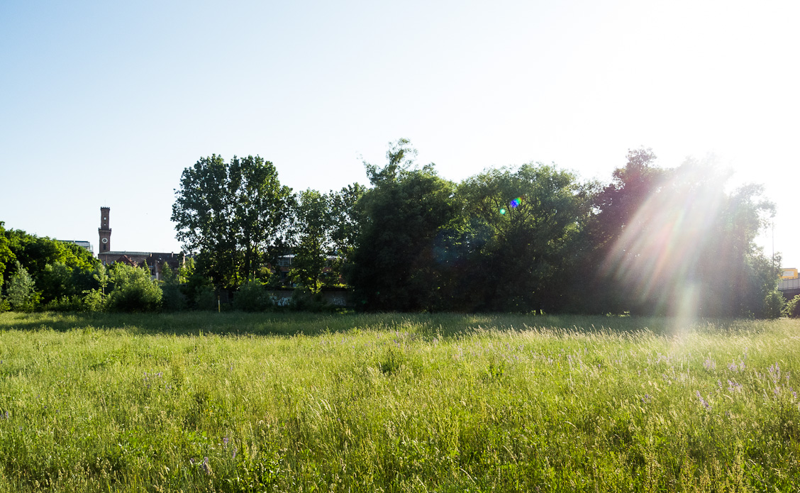 Sommeridylle in Fürth – Fürth im grünen – Natur – Wiesengrund