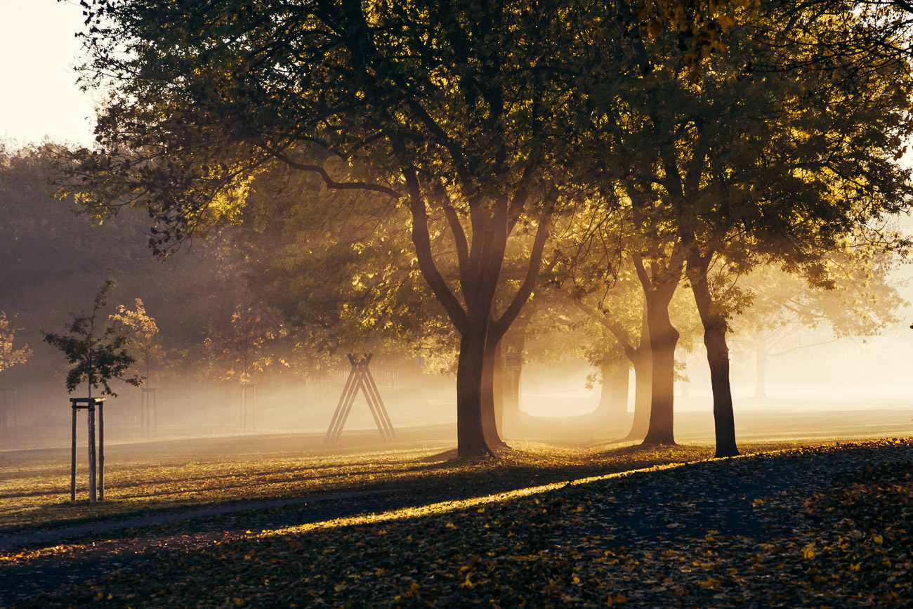 Fürth Wiesengrund im Morgennebel