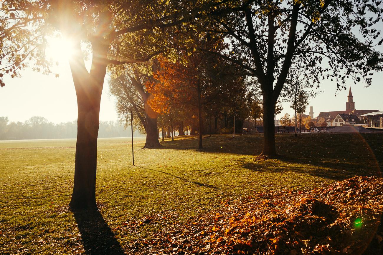 Herbst im Wiesengrund