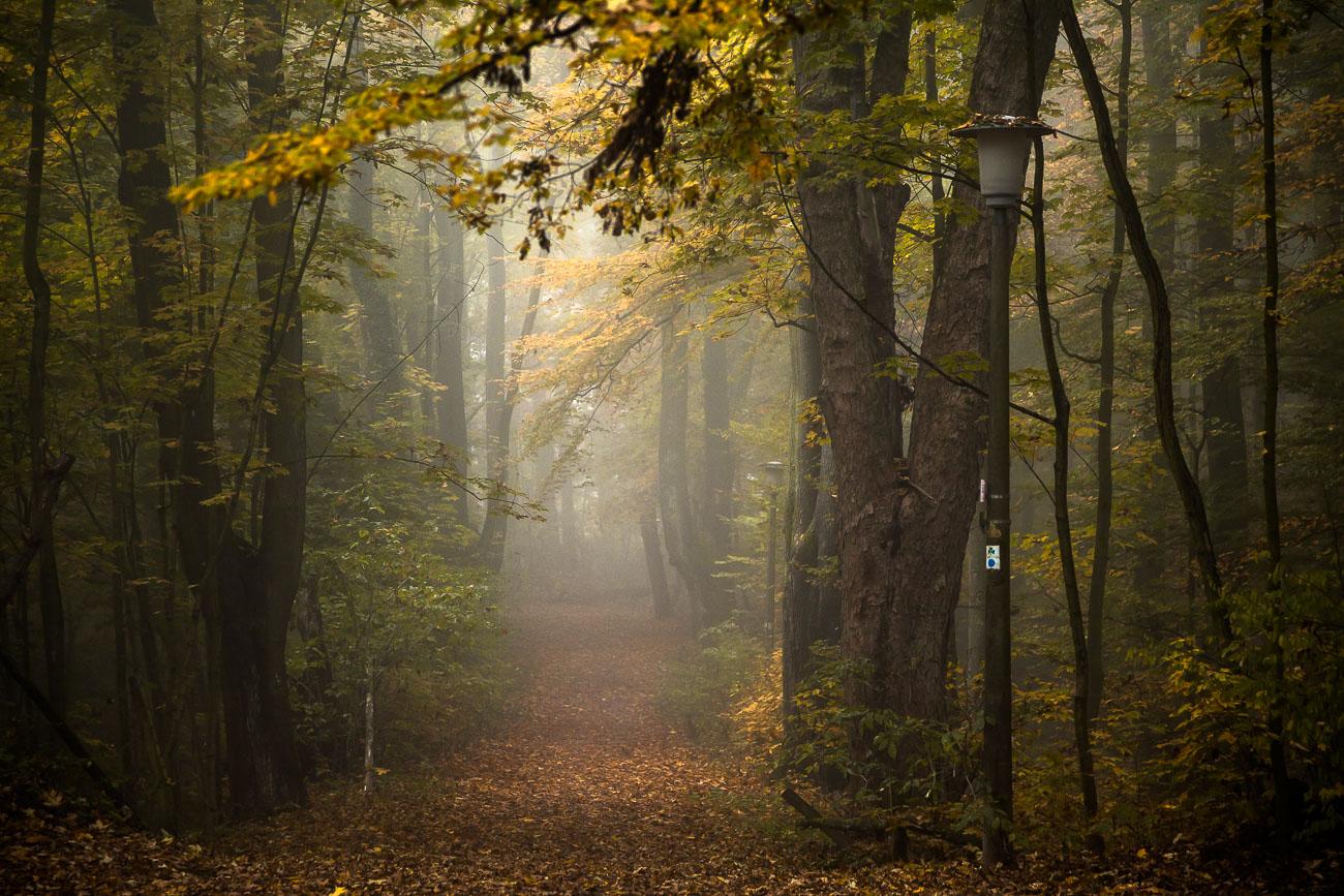 Herbstnebel an einem Weg im Fürther Stadtwald