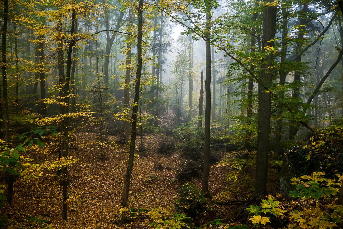 Stadtwald Fürth