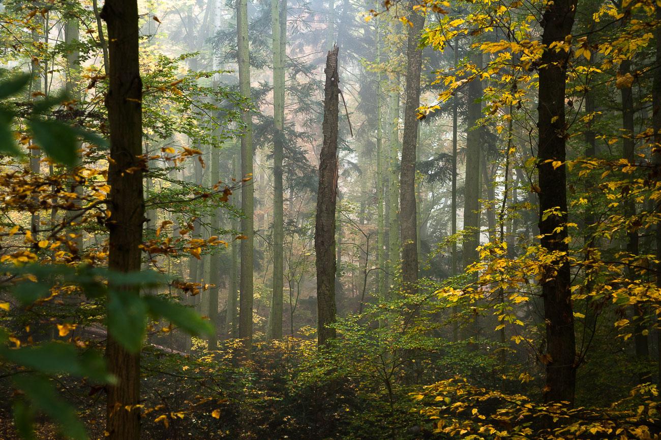 Fürth Stadtwald
