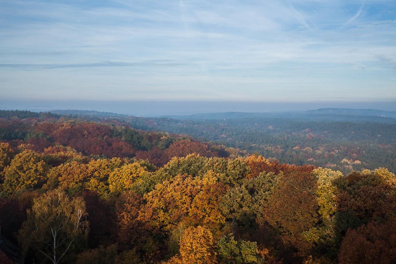 Stadtwald Fürth im Herbst