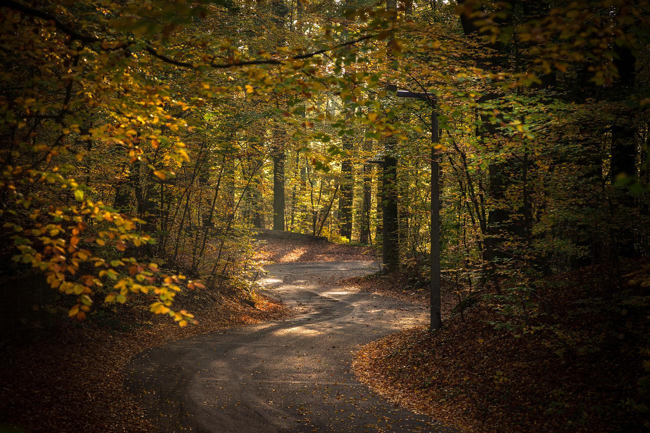 Straße im Fürther Stadtwald