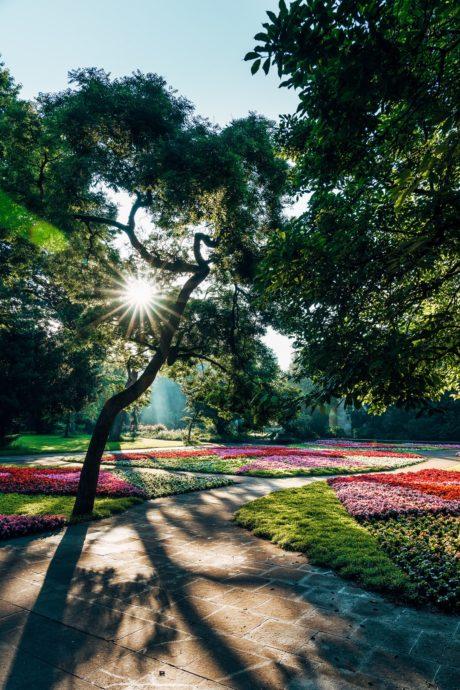 Stadtpark Fürth Blumenbeete